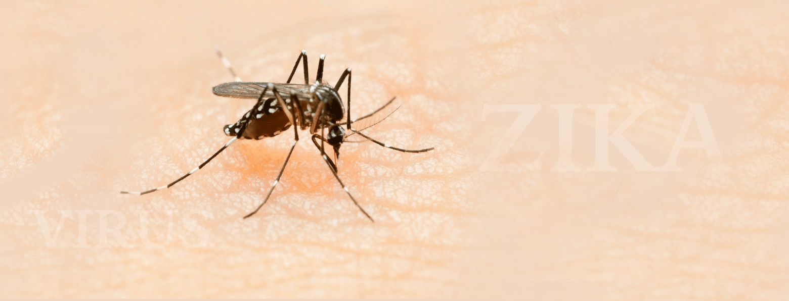 Virus Zika, les recommandations